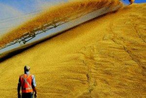 Засуха помешала российскому экспорту