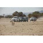 В Израиле пройдет дамская джип-экспедиция «Королева пустыни 2010»