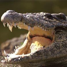 Рейсовый самолет рухнул из-за сбежавшего крокодила