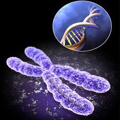 Генетики приблизили бессмертие
