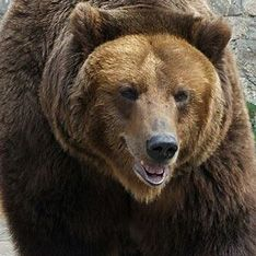 Забайкалье атаковали голодные медведи