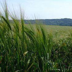 Трава победит глобальный голод