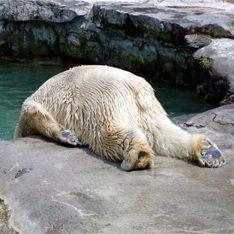В Московском зоопарке ранили Врангеля