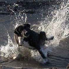 Главный собачий секрет убивает человека