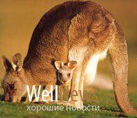 Австралийские риелторы ищут покупателя на зоопарк