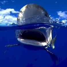 В Египте поймана напавшая на россиян акула