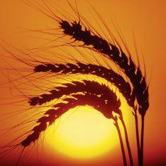 Зерно повергнет мир в пучину нового кризиса