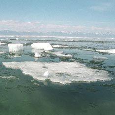 Тающие льды угрожают 800 миллионам человек