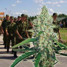 Армию бросят на борьбу с наркотиками