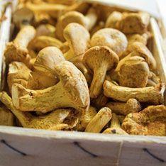 Горожан предостерегли от грибов