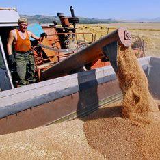 Россия накормит хлебом планету