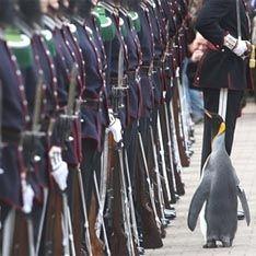 Пингвины-геи оказались ловеласами