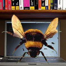 Пчелы считают быстрее компьютеров