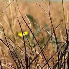 Засуха вогнала в нищету полтора миллиона россиян