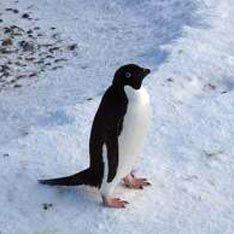 Россия развернется в Антарктиде