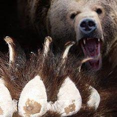 В Подмосковье медведь растерзал женщину